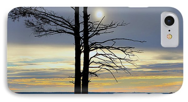 Bald Cypress Silhouette IPhone Case