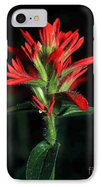 Banff - Indian Paintbrush 4 IPhone Case