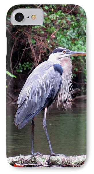 Bearded Blue Heron IPhone Case