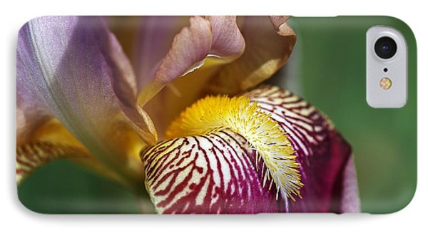 Bearded Iris Flower Mary Todd IPhone Case