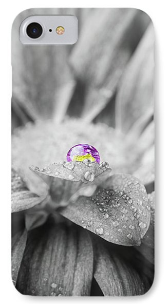 Beautiful Splash Of Purple On A Daisy In The Garden IPhone Case