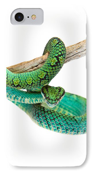 Beautiful Sri Lankan Palm Viper IPhone Case