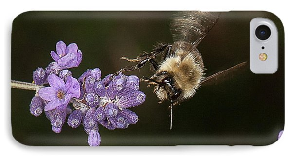 Bee Landing On Lavender IPhone Case