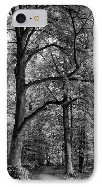 Beech Forest - 365-222 IPhone Case