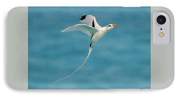 Bermuda Longtail S Curve IPhone Case