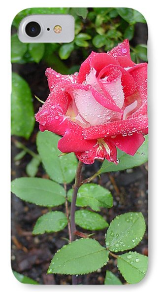 Bi-colored Rose In Rain IPhone Case