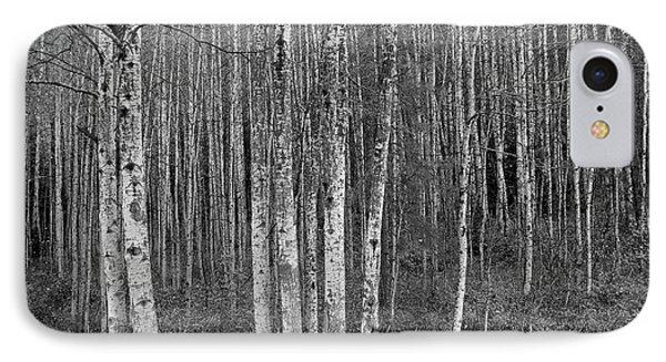 Birch Tress IPhone Case