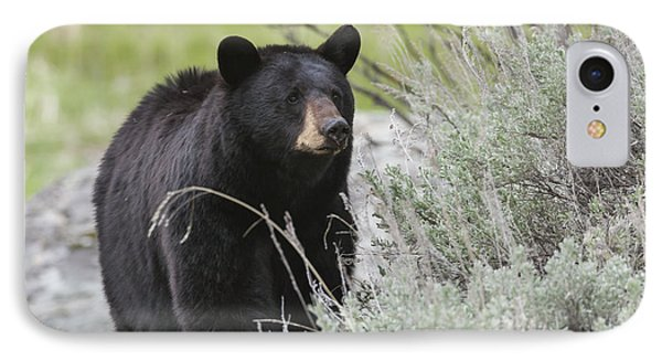 Black Bear Sow IPhone Case