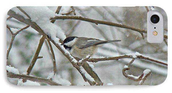 iPhone 8 Case - Black Capped Chickadee - Poecile Atricapillus by Mother Nature