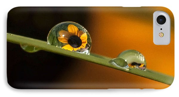 Black-eyed Susan In Dew IPhone Case