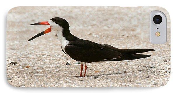 Black Skimmer On Assateague Island IPhone Case