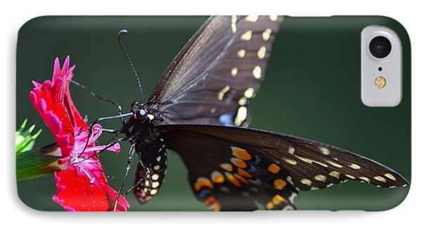 Black Tiger Swallowtail IPhone Case