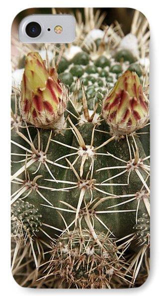 Blooming Cactus1 IPhone Case