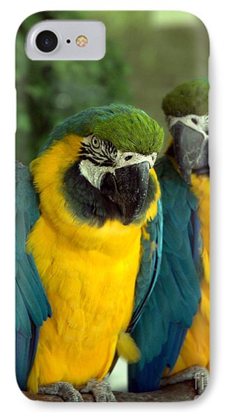 Blue And Gold Macaws IPhone Case