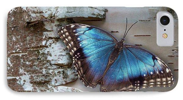 Blue Morpho Butterfly On White Birch Bark IPhone Case