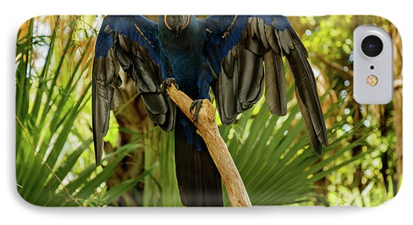 Blue Parrot IPhone Case