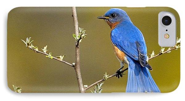 Bluebird Bliss IPhone Case