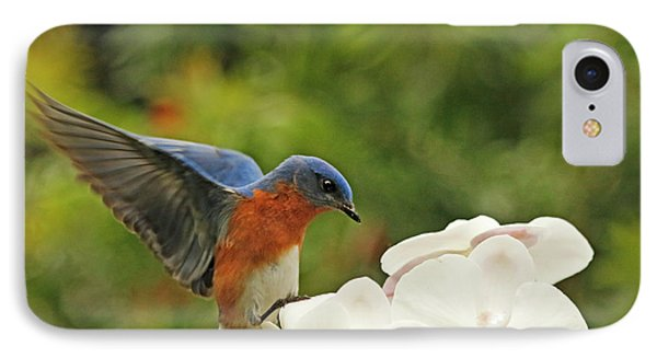 Bluebird Landing On Orchid IPhone Case
