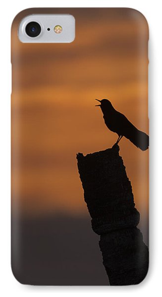 Boat-tailed Grackle At Sunset IPhone Case