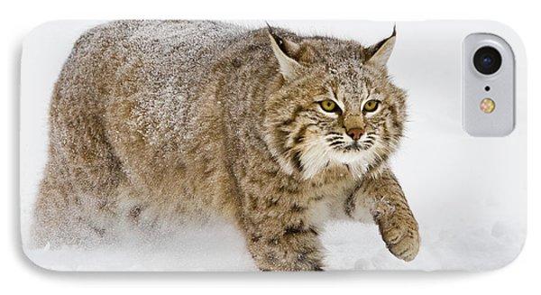 Bobcat In Snow IPhone Case