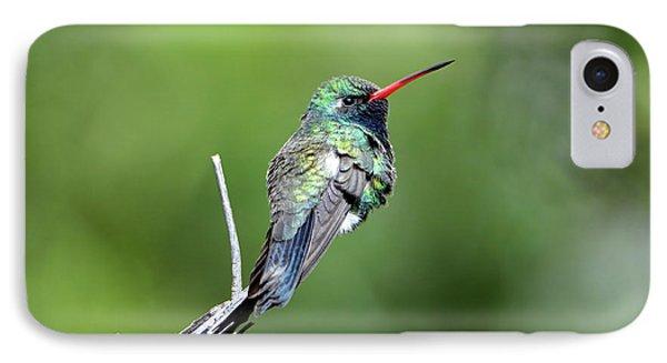 Broad-billed Hummingbird IPhone Case