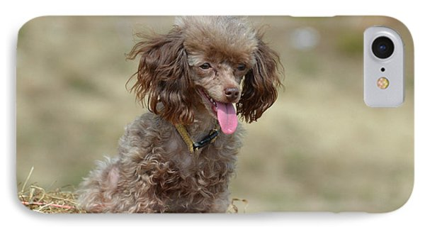 Brown Toy Poodle On Bail Of Hay IPhone Case