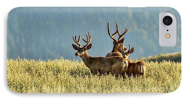 Buck Mule Deer In Velvet IPhone Case