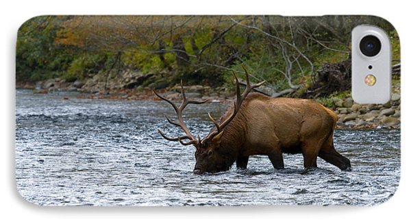 Bull Elk Crossing The River IPhone Case