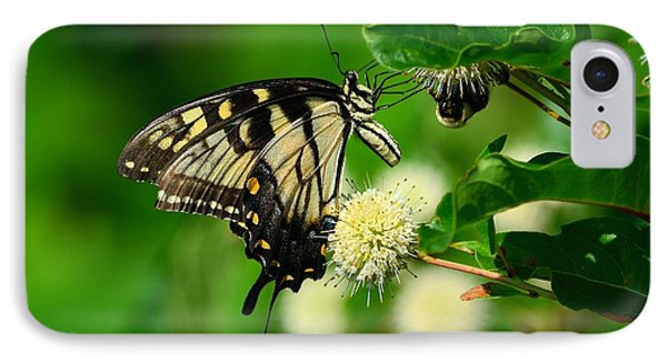 Butterfly And The Bee Sharing IPhone Case