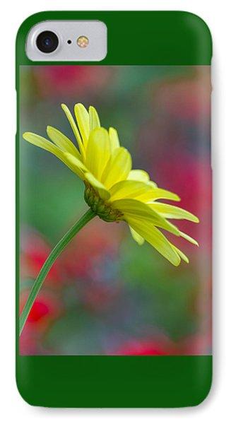 Butterfly Daisy IPhone Case