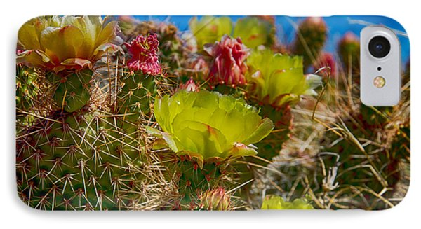 Cactus At The End Of The Road IPhone Case