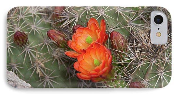 Cactus Blossoms IPhone Case