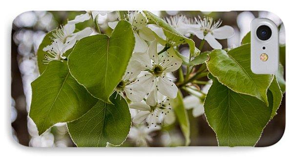 Callery Pear Tree Bloom IPhone Case