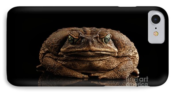 Cane Toad - Bufo Marinus, Giant Neotropical Or Marine Toad Isolated On Black Background, Front View IPhone Case
