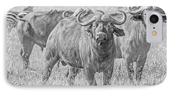 Cape Buffalos In Serengeti IPhone Case
