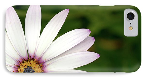 Cape Daisy IPhone Case