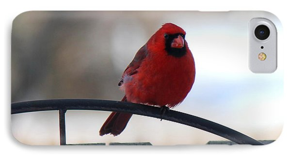 Cardinal Closeup IPhone Case