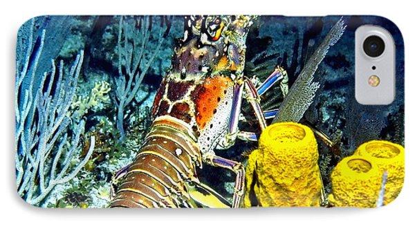 Caribbean Reef Lobster IPhone Case