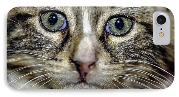 Cat 1 IPhone Case