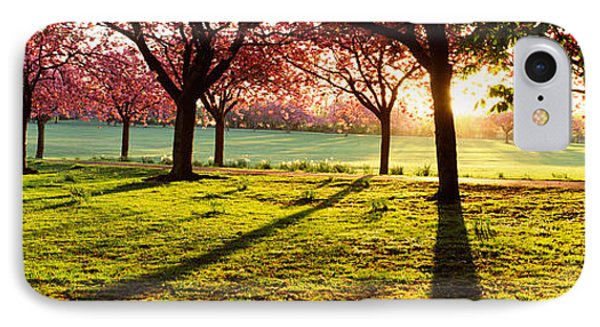 Cherry Blossom In A Park At Dawn IPhone Case