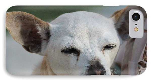 Chihuahua Snaggle Puss  IPhone Case