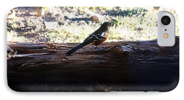 Chocolate Bird At The Bosque Refuge IPhone Case