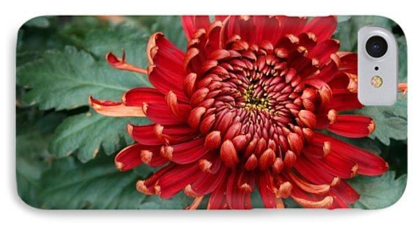 Christmas Chrysanthemum IPhone Case