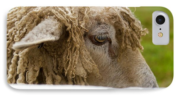 Close-up Of Leicester Longwool IPhone Case