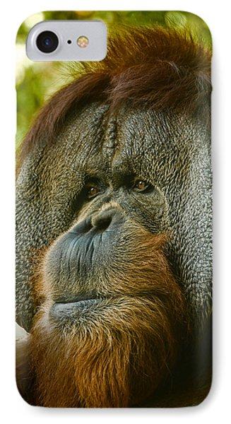 Close Up Portrait Of Orangutan IPhone Case