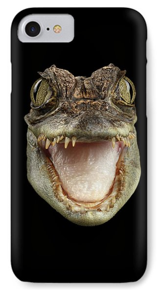 Closeup Head Of Young Cayman Crocodile , Reptile With Opened Mouth Isolated On Black Background, Fro IPhone Case