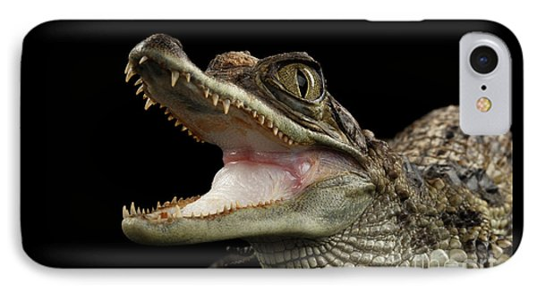 Closeup Young Cayman Crocodile, Reptile With Opened Mouth Isolated On Black Background IPhone Case