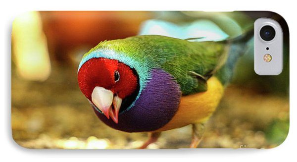 Colorful Bird IPhone Case