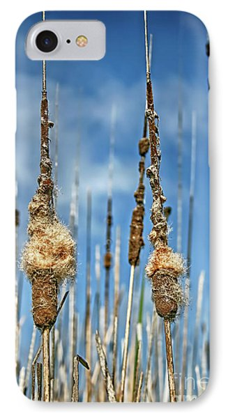Common Cattail Seeds IPhone Case