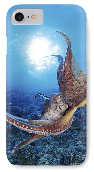 Common Cuttlefish IPhone Case